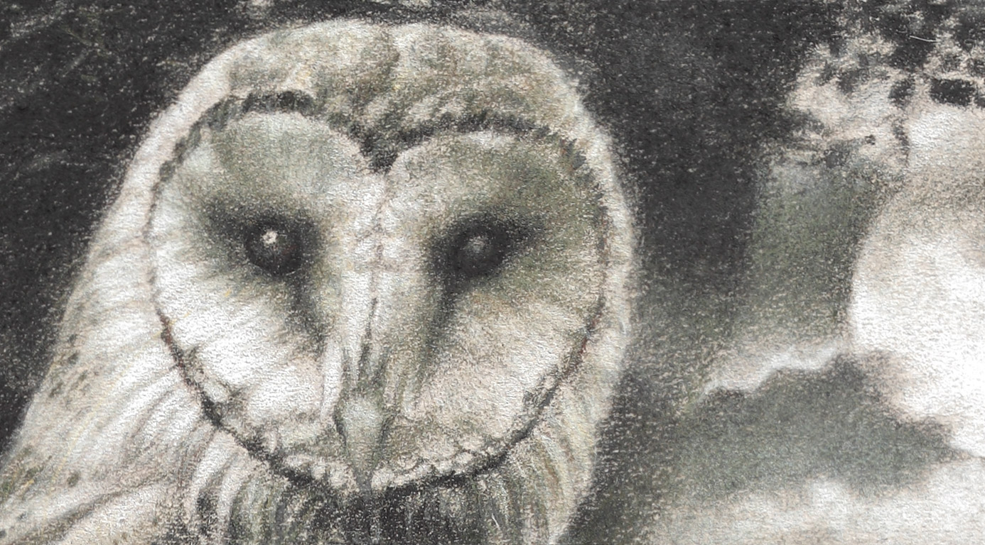 Paul Christiaan Bos: Barnowl Feline from close up