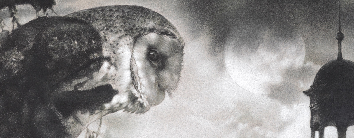 owl from close up