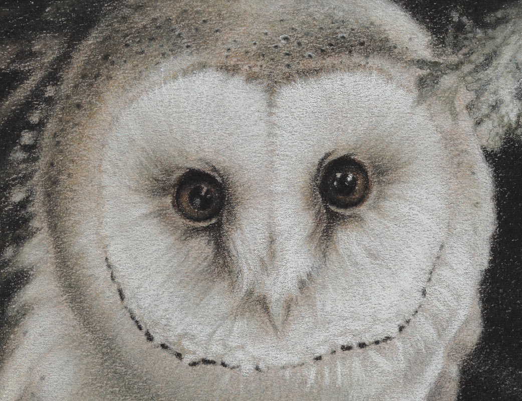 Paul Christiaan Bos: detail expression barn owl chick Tinkerbell