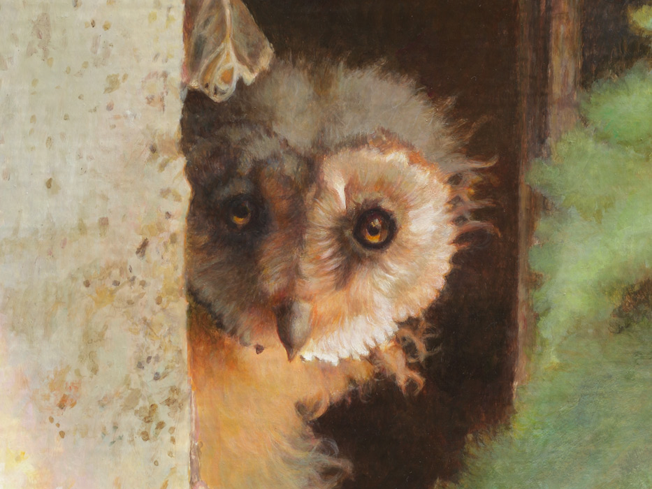 Paul Christiaan Bos: detail Face young barnowl Molly