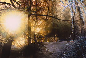 Paul Christiaan Bos, painting: The Light Released. The sun running riot over a snow-laden wood.