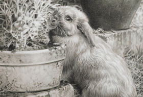 Paul Christiaan Bos, drawing: Melijn In Her Garden, Melijn was an amazing rabbit that lived her whole life running free and wild in the garden, and yet knew her name and loved us back, in her way. We still miss her terribly.