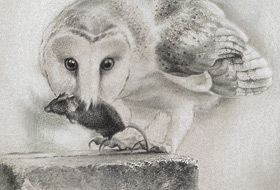 Paul Christiaan Bos: Observation 1, Barnowl Coppernickle and his prey