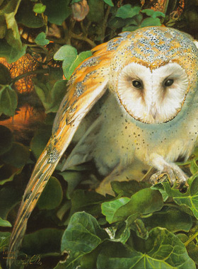 Paul Christiaan Bos: Barnowl appears threateningly from the ivy, acrylics