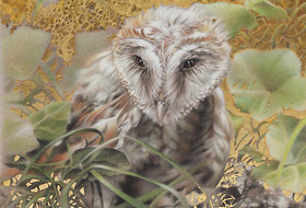 Paul Christiaan Bos: Young Barnowl Aurore, charcoal and gold leaf