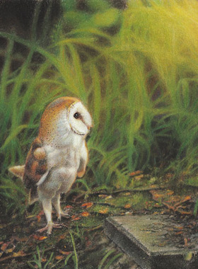 Paul Christiaan Bos: reverie, barn owl Coppernickle looks at sinking sun