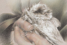 Paul Christiaan Bos: with young barnowl Tinkerbell in my arms, saved from hypothermia, charcoal