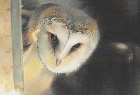 Paul Christiaan Bos: Young Barnowl Tinkerbell, charcoal