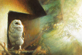 Paul Christiaan Bos: barn owl chick Tinkerbell by Morning Light