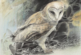 Paul Christiaan Bos: Primeval Mother, silverpoint. Portrait of the mysterious Owlmother Feline.