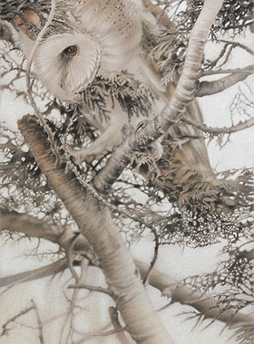 Paul Christiaan Bos: young barnowl Tinkerbell recently cast out, in the freezing cold