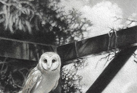 Paul Christiaan Bos: barn owls Coppernickle and Tinkerbell against the clouds, from lookout post