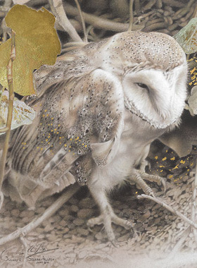 Paul Christiaan Bos: Barnowl Tinkerbell after attack by marten, gold leaf and charcoal