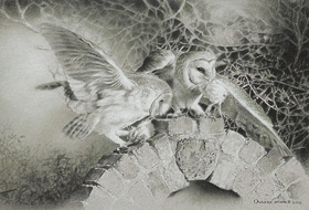 Paul Christiaan Bos: Barowls Mating Ritual, charcoal, observation