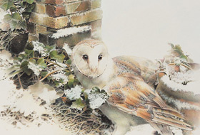 Paul Christiaan Bos: barnowl Coppernickle in the snow