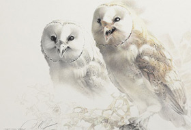 Paul Christiaan Bos: study Joy, the surprising discovery that the Barn Owl really can laugh -  it even reaches the eyes