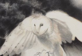 Paul Christiaan Bos: first true flight young Barnowl