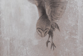 Paul Christiaan Bos: barnowl Tinkerbell slowly rising in the air