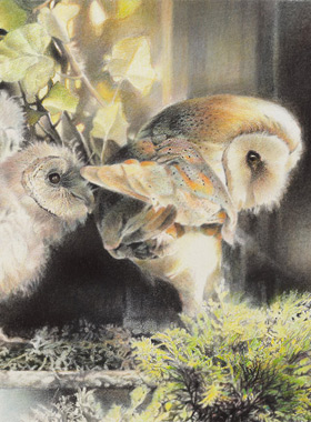 Paul Christiaan Bos: Owl mother protecting her children, charcoal