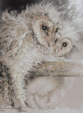 Paul Christiaan Bos: The Box: barnowl chicks le Fay and Ariane safely stowed away in the playpen