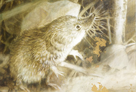 Paul Christiaan Bos, acrylics: The Shrew, with gold leaf. A memory of what overcame me in the hideout one night.