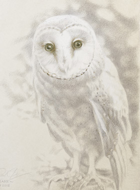 Paul Christiaan Bos: The Gaze of  Ariane, small Barnowl asking for help