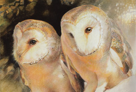 Paul Christiaan Bos: Father Coppernickle and Daughter Ariane, how barnowls can care for each other